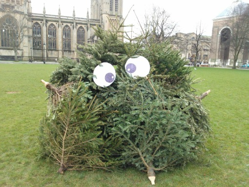 Christmas trees on College Green