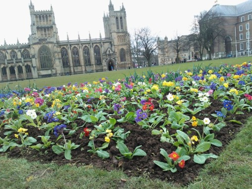 College Green flowers