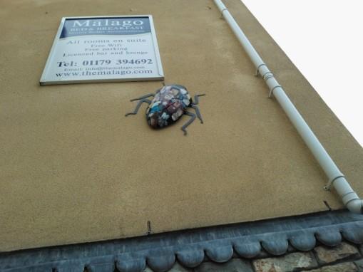 Bedminster bugs (12)