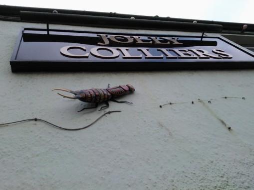Bedminster bugs (13)