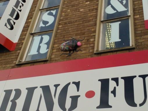 Bedminster bugs Bristol (16)