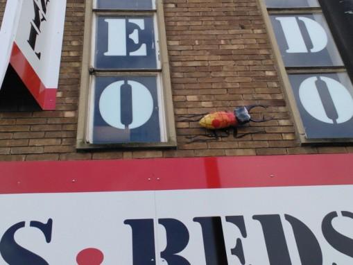 Bedminster bugs Bristol (17)