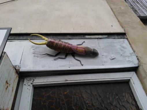 Bedminster bugs Bristol (48)