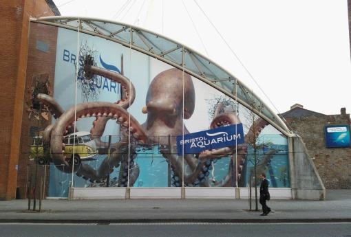 Bristol Aquarium giant octopus